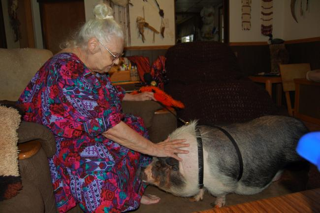 KAREN CIMMS/TIMES NEWS Betty Johnson pats her daughter's 6-year-old Vietnamese pot-bellied pig, Stella Dora Von Swineburg, at her Lehighton home.