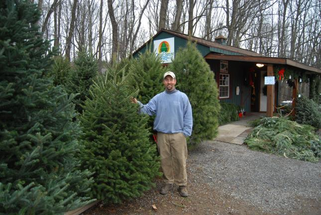 RON GOWER/TIMES NEWS Chris Botek, whose family owns Crystal Spring Tree Farm in Mahoning Township, stands next to Christmas trees on his farm. For the 13th time in 15 years, the farm is supplying the tree for the Capitol Rotunda in Harrisburg.