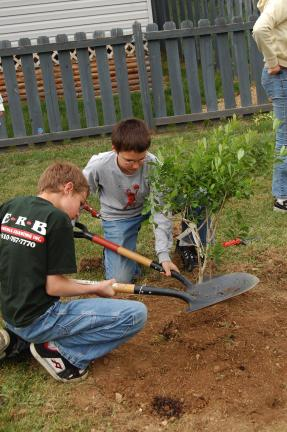 Jarret and Dylan Berger are packing the dirt around a plant.