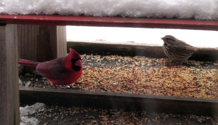 AL ZAGOFSKY/SPECIAL TO THE TIMES NEWS A male Cardinal and a Dark-eyed Junco visit a bird feeder outside the Carbon County Environmental Education Center in Summit Hill. Birds from the north fly south to Pennsylvania to join with those that don't migrate.