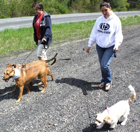 "ANDREW LEIBENGUTH/SPECIAL TO THE TIMES NEWS Stacia Smith, on left, from Tamaqua walks her two 2-year old German Sheppard Rotty Boxers ""Max"" and ""Mya"" during the TAAR fourth annual dog walk held recently. Pictured on right is Monica Williams, from…"