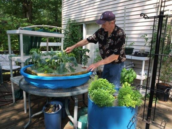 AL ZAGOFSKY/SPECIAL TO THE TIMES NEWS At his home, Steve Pheiffer has been experimenting growing tomatoes, basil, rosemary, cauliflower, bell pepper, watermelon and cucumber hydroponically-in nutrient-infused water without soil.