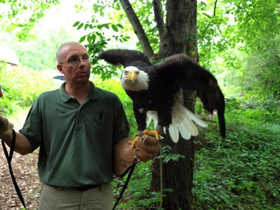 AL ZAGOFSKY/SPECIAL TO THE TIMES NEWS Franklin Klock of the Carbon County Environmental Education Center holds Renshaw, a Bald Eagle, named for his trainer, Frederick Renshaw Wallace. The new flight pen is dedicated to Wallace.