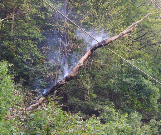 ANDREW LEIBENGUTH/TIMES NEWS Pictured is a smoldering tree that fell onto a power line in South Tamaqua yesterday. This resulted in a power outage to surrounding homes and businesses.