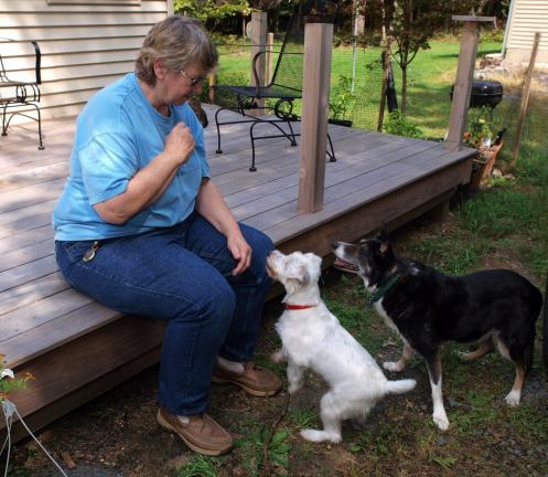 AL ZAGOFSKY/SPECIAL TO THE TIMES NEWS Susan Bulanda, a Penn Forest animal behaviorist has compiled stories of Holocaust survivors whose pets gave them comfort, suffered alongside them, and waited for their return.
