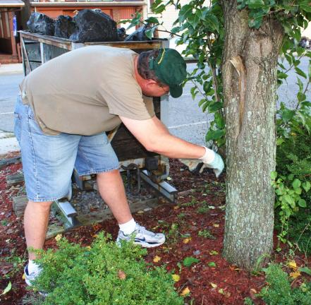 ANDREW LEIBENGUTH/TIMES NEWS Kevin Steigerwalt trims a tree on the North Railroad Street parking lot during their seasonal cleanup held Monday evening held in Tamaqua.