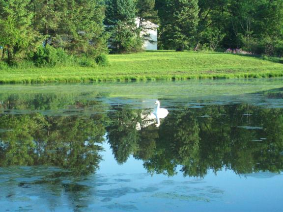 Gail Maholick/TIMES NEWS A lone plastic swan floats in the middle of a pond at the Phifer Ice Dam Park. Whether the lone swan is keeping the geese away or whether it's because of the Franklin Township Police Department's efforts is up for discussion.