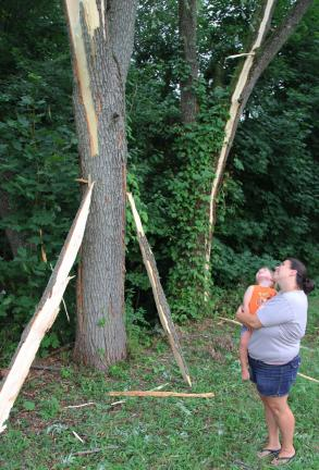 ANDREW LEIBENGUTH/TIMES NEWS Rebecca Case, holding Brandon, her 2-year old son, stare up at the damage left to one of two trees following double-edged lightning strike that occurred during yesterday's storm.