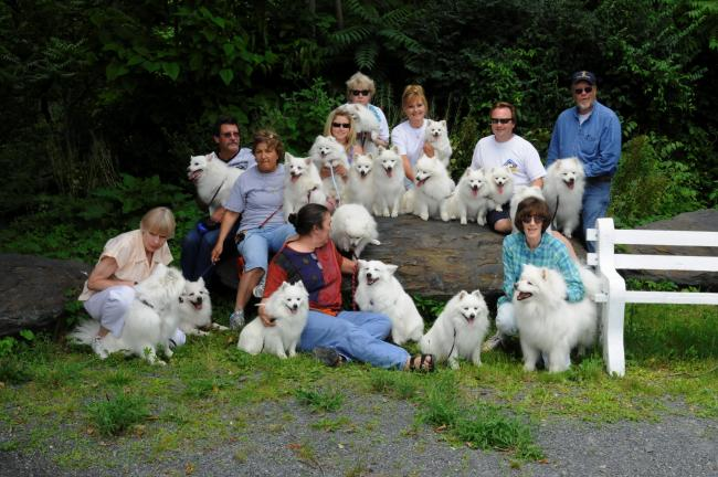 RON GOWER/TIMES NEWS A total of 18 Eskimo dogs were at a gathering of the American Eskimo Dog Fanciers Club of Greater Philadelphia, held at the Lehigh Canal Park in Weissport and hosted by Sandra and Todd Wingert of Mahoning Township. Eskimo dog…