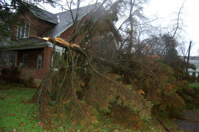 TERRY AHNER/TIMES NEWS  This tree rests next to a house along Fireline Road in Palmerton this morning in the aftermath of Hurricane Sandy.