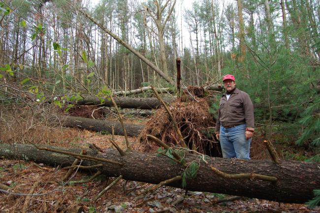 LINDA KOEHLER/TIMES NEWS Blaine Silfies surveys the path of destruction from Sandy in the woods next to his home.